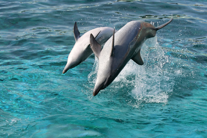 Dolphin Watch & Shelling Tour